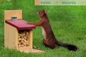 Cómo almacenar cacahuetes
