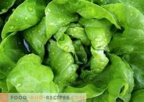 Cómo congelar las hojas de lechuga para el invierno
