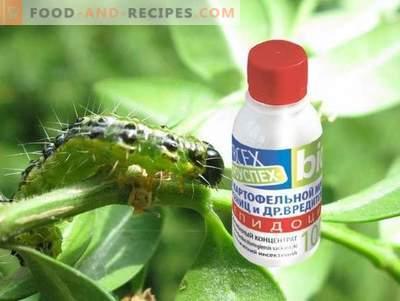 Le lépidocide est un médicament efficace contre les ravageurs dévoreurs de feuilles